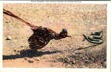 C42-8174, BIRD THEME OR BIRD TOPIC, POSTCARD.