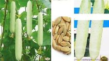 15x géant blanc / CONCOMBRE graines Plant rarité RARE Comestible LÉGUMES #42