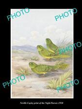 NEVILLE CAYLEY VINTAGE PRINT OF AUSTRALIAN BIRDS, 16x11, THE NIGHT PARROT