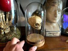 Oddities / Cabinet de curiosités / Réplique Crane foetus humain sous globe