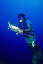 787041 Diver With Hawksbill Turtle Palau Caroline Islands A4 Photo Print