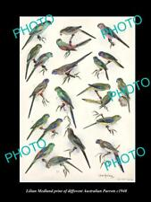 LILIAN MEDLAND VINTAGE PRINT OF AUSTRALIAN BIRDS, 16x11, PARROT BREEDS