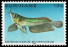 "SURINAME 557 (Mi910) - Silver Arowana ""Osteoglossum bicirrhosum"" (pa83936)"