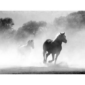 Horses Running Mist BW Wall Art Print
