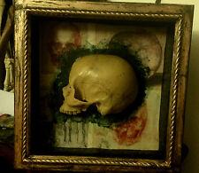 Framed Vintage Cast of Human Half Skull - Gothic Decor - Cabinet of Curiosities