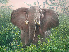 """The Constant Gardener"" Guy Combes Fine Art Limited Edition Canvas - Elephant"