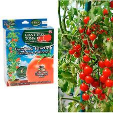 Gardener's Choice Giant Tomato Tree Seeded Planter As Seen On TV 8 ft 60 lb New