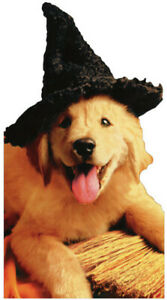 Pup With Witch Hat & Broom Little Big Funny Dog Halloween  2 Cards Avanti Press