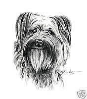 Pyrenean Shepherd Pencil Drawing 8 x 10 Art Print by Artist Djr