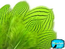 1 Dozen Lime Green Silver Pheasant Plumage Barred Black Feathers Jewelry Costume