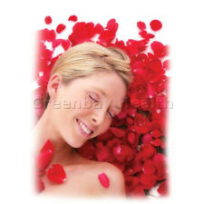 Romantic Red White Rose Petals