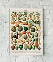 Vintage Fruit Print, Fruit Artwork, Vintage Fruit, Fruit Wall Art