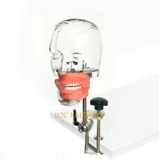 Dental phantom head teeth model Typodont Teeth with new style bench mount