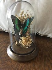 "Vtg 7.5"" Dome Entomology Taxidermy Butterfly Green Peacock Papilio Palinurus"