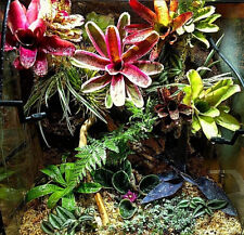 BROMELIAD Neoregelia Collection 10 Pack 10 Varieties 40% Off Already LOW Prices!