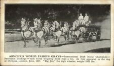Armour Grays Horse Team Percheron Geldings Olympia London 1907 Postcard