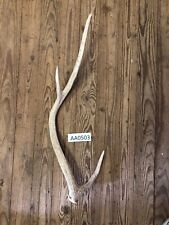 Axis Deer Shed antler hill country Knife Handle wildlife Exotic Western AA0503