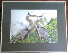 Bird Wildlife Photography - Great Blue Heron Marsh- Lou Newman Art Print