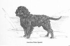 American Water Spaniel - 1962 Vintage Dog Art Print - G. Cook