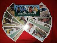 Vintage Soviet USSR Postcards set 15pcs HORSES