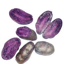 RARE Purple Sweet Potato Seeds Bonsai Exotic Celicious - Free Shipping
