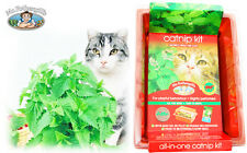 Mr. Fothergills Catnip Seed Kit for cat and Kitten