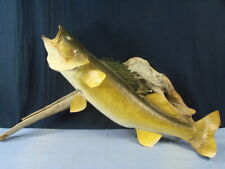Beautiful Musky 28'' Taxidermy Walleye Fish Mount On Driftwood