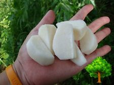 *UNCLE CHAN* 50 SEED MEXICAN SWEET POTATO SEEDS JICAMA YAM BEAN ORGANIC RARE