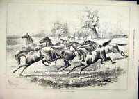 Original Old Antique Print 1877 Young Horses Running Field Country Scene 19th