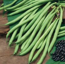 Organic - Suffolk Herbs - Picture Packet - Climbing French Bean - Cobra - Seed