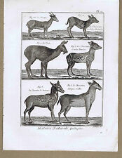 Muntjac Deer-Mouse Deer-Chevrotain - Quadrupeds 1792 Engraved Print - Plate 60