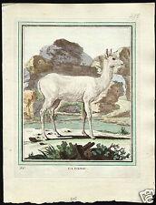 Buffon Quadrupeds La Daine deer hand colored 1700-1800 natural history animals