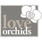 Love Orchids UK