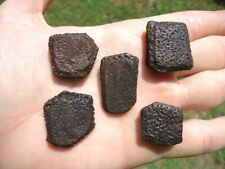 5 Choice Lesser Giant Armadillo Scutes Osteoderms Bones Florida Fossils Tooth Fl
