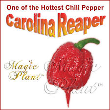 Carolina Reaper Dry Pepper (1kg=2.2lb) Dried Whole Reaper Peppers -Extremely Hot