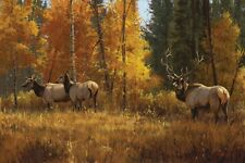 Paco Young - Autumn Brilliance Artist Proof $129 cad Free Insured Shipping