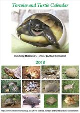 Tortoise and Turtle Calendar 2019 A4