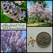 10+ PRINCESS TREE SEEDS (Paulownia elongata)  Fast Growing Fragrant Purple