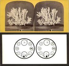 18 Stereofotos tolle 3-D-Effekte Korallen usw. Serie 1