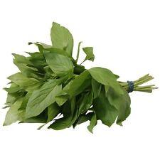 Authentic Fresh Thai Sweet Basil  (100g) - UK Seller
