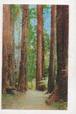 Muir Woods National Monument USA 1957 Postcard 957a