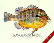 Longear Sunfish Fish Painting American Freshwater Fishing Art Real Canvas Print