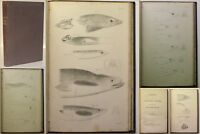 Kaup Catalogue of Apodal Fish 1856 Ichthyologie Fische Fischkunde Zoologie xy