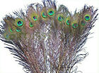 10/50/100 pcs Real natural peacock feathers 10-12inches Decoration craft