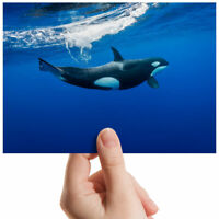 "Killer Whale Orca Ocean Life Small Photograph 6"" x 4"" Art Print Photo Gift #2006"