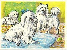 1952 Dog Art Print Card Austria Tobacco Company Bildwerk MALTESE & SEIDENSPITZ