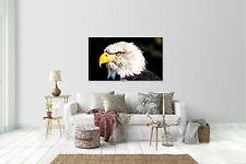 Pegatina de pared, adhesivo de Pared Adhesivo Águila V2 tamaño: 120 x 70cm