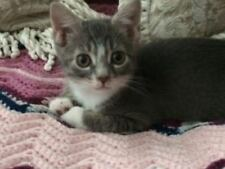 SPONSOR CAILA KITTEN FERAL CAT RESCUE HELP FEED VET Rec COLOR PHOTO CHARITY