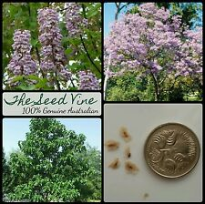 100+ EMPRESS TREE SEEDS (Paulownia tomentosa) Fast  Fragrant Purple Pink Flower