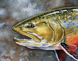 """Fly Fishing """"BROOK TROUT"""" Watercolor 8 x 10 ART Print by Artist DJ Rogers"""
